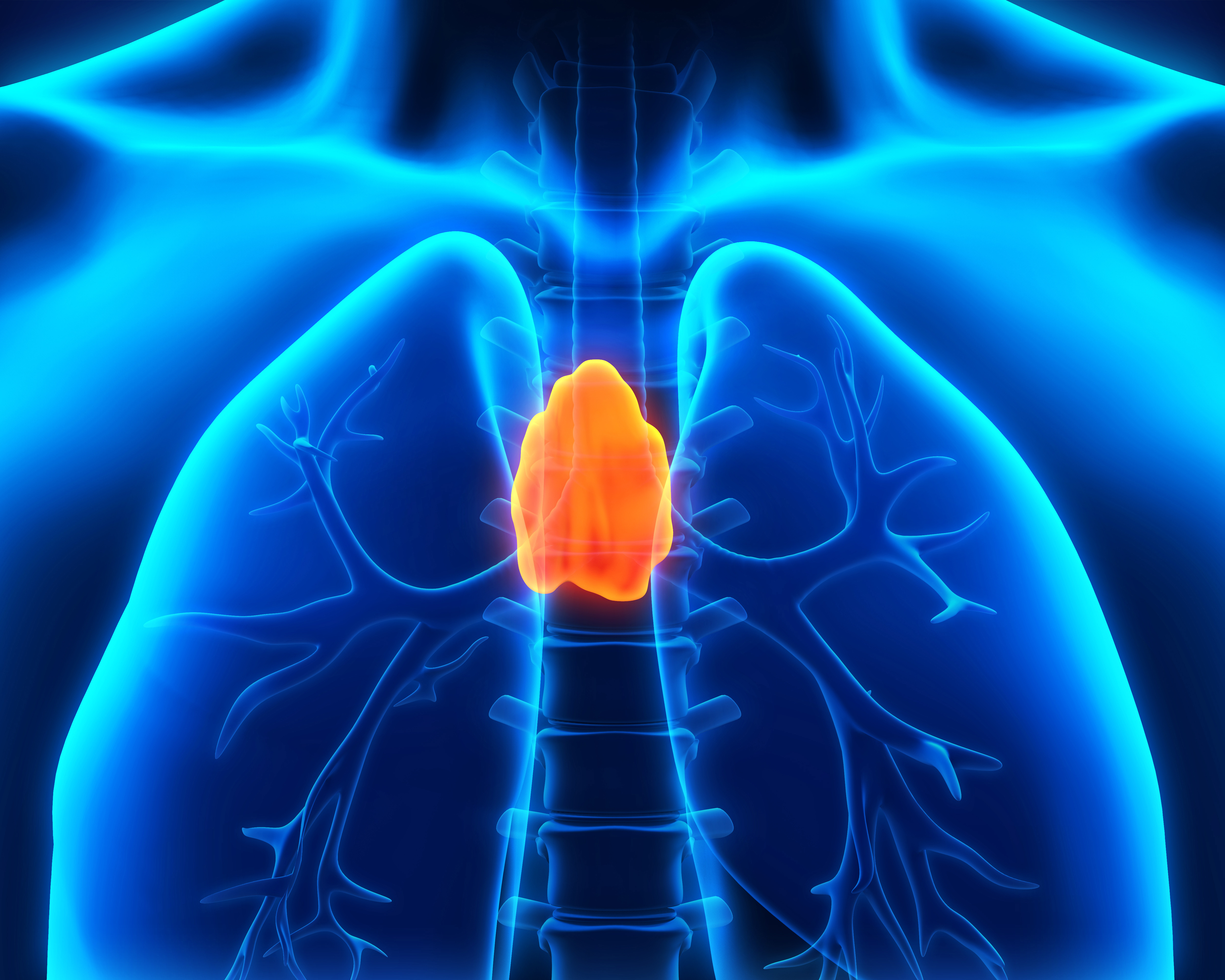 The Role The Thymus Gland Plays In Immune Health Alternative Health